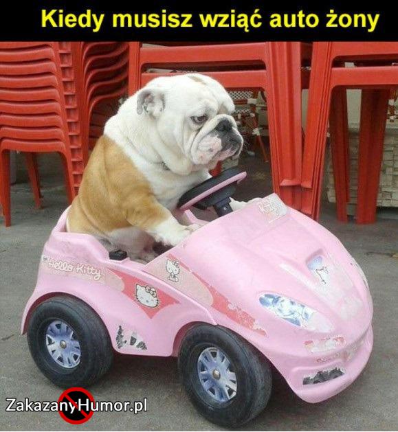 auto-zony