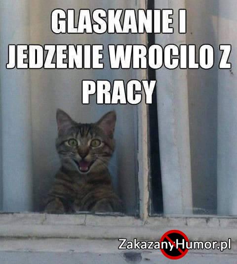 prawda-o-kotach