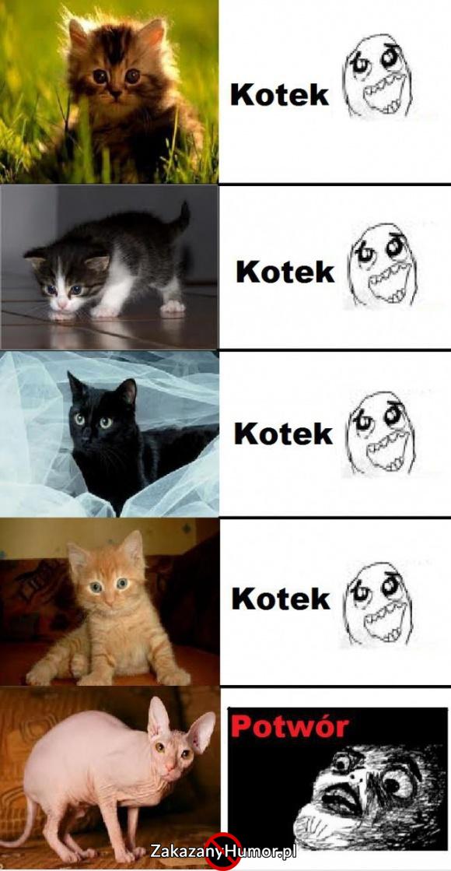 Rodzaje koteczków