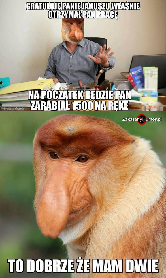 Janusz-otrzymał-pracę...