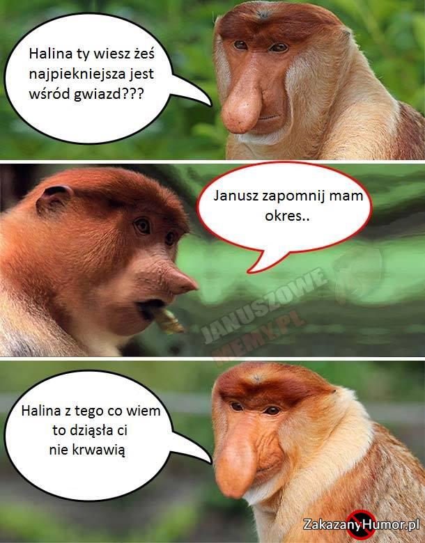 Januszowo-Halynowe-sprawy