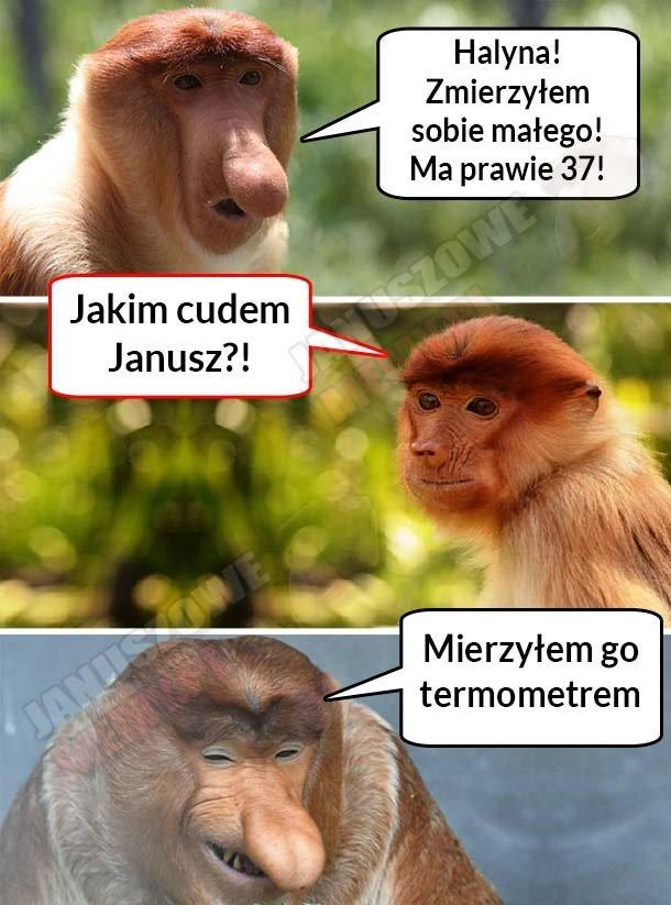 Janusz-sobie-zmierzył…